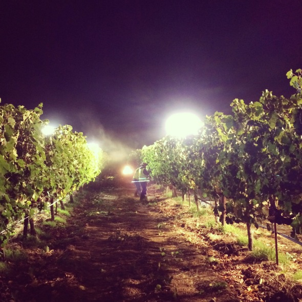 Benziger Night Harvest 2014
