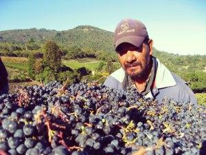 joaquin_grapes